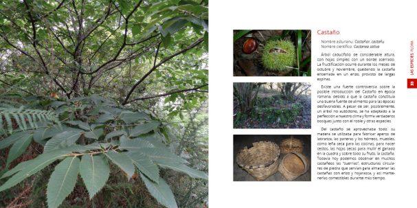 flora-castano